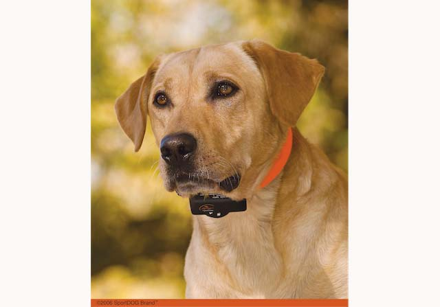 .DCSBC-6_Yellow Lab.jpg